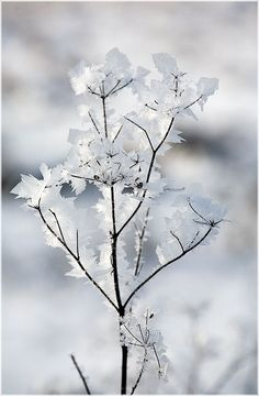 Rosamaria G Frangini |  Season Winter |