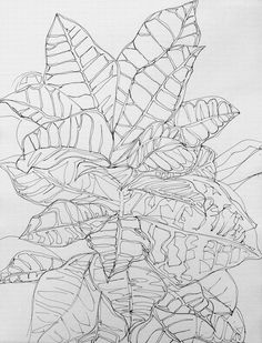 Drawing of a plant in the No1 Science Park reception