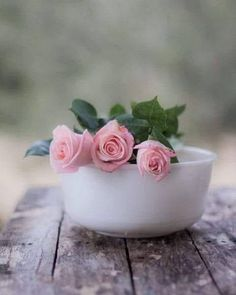 Beautiful Flowers Wallpapers, Beautiful Rose Flowers, Beautiful Flower Arrangements, Pretty Roses, Flowers Nature, Shabby Chic Porch, Shabby Chic Garden, Pink Roses, Pink Flowers