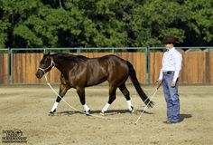Groundwork Exercise #1: Lunging for Respect, Stage 3  Goal: To have the horse circle around you with the belly of the rope on the ground, maintaining his gait and direction, until you yield his hindquarters with just a look and draw him up to you. You should be able to keep your feet completely still the whole time.  Learn more https://www.downunderhorsemanship.com/Store/Product/MEDIA/D/254/