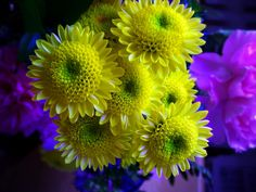 -Spring Flowers Archives -