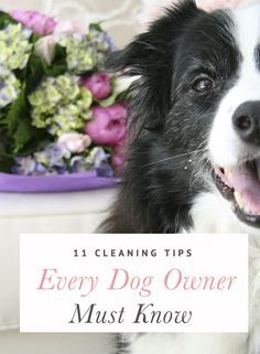 11 Cleaning Tips Every Dog Owner Must Know: Some really helpful bits of advice in here!