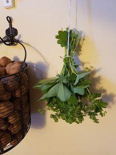 Kontryhel ostrolaločný neboli alchemilla vulgaris Plant Hanger, Herbs, Plants, Decor, Decoration, Herb, Plant, Decorating, Planets