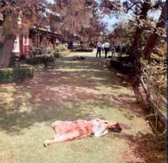 August 10th 1969 Abigail Folger on back lawn after being murders the previous night.