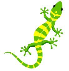 ผลการค้นหารูปภาพสำหรับ gecko painting