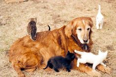 puppies and kittens pictures | funny cats and kittens cute and funny cats and kittens