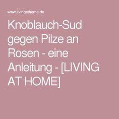 Knoblauch-Sud gegen Pilze an Rosen - eine Anleitung - [LIVING AT HOME]