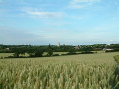 Ashwell's 14th century church spire peaks over the countryside ...