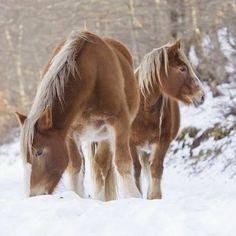 Just horsing around ☃❄️#snowday #mycountryliving #winterwonderland