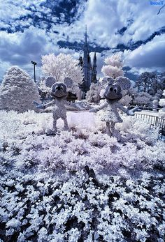 Disney Infrared: Mickey & Minnie Mouse Pose In The Cindere… | Flickr