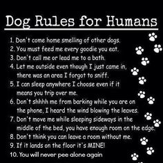 Most Funny Quotes : Dog Rules For Humans I Love Dogs, Puppy Love, Cute Dogs, Puppy Play, Schnauzers, Dachshunds, Beagles, Boxer Dogs, Weenie Dogs