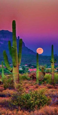 Saguaro Cactus Sunset, Picacho Peak, Arizona