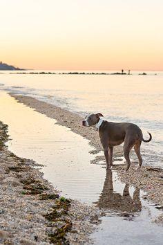 Handsome Zeus at the Beach | Laura Pea Photography | Long Island Pet Photographer | www.laurapeaphotography.com Beautiful Nature Scenes, Beautiful Boys, Beach Sessions, Pet Photographer, First Photograph, Us Beaches, Best Mom, Long Island, Dog Friends