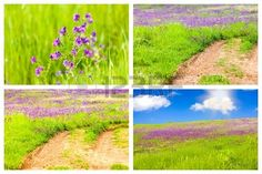 Stock photo available for sale at 123rf: Set of four meadow backgrounds, each of 2800 x 1867 pixels