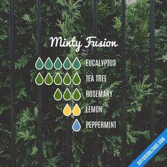 """ Minty Fusion - Essential Oil Diffuser Blend ""you got a min."