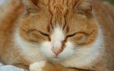 Spicí kočka na pozoru