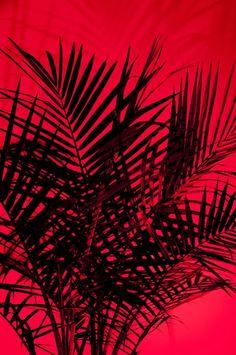 17 Ideas Wall Paper Aesthetic Preto E Vermelho