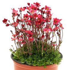 png cutout plant