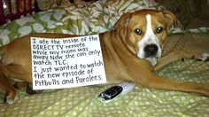 My first dog shaming! Funny Animal Quotes, Funny Animals, Direct Tv Remote, Dog Varieties, Dog Shaming, Funny Dogs, Dog Lovers, Pitbulls, Lol