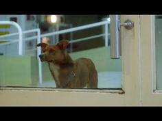 "▶ FUNDACION ARGENTINA DE TRASPLANTE HEPATICO ""The Man and the Dog"" - YouTube"
