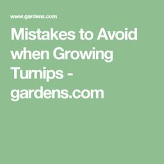 Mistakes to Avoid when Growing Turnips - gardens.com