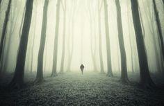 Test d'une promenade dans la forêt C'est ce qu'on appelle un test de psychologie relationnel. Imaginez-vous en train de marcher dans une belle forêt