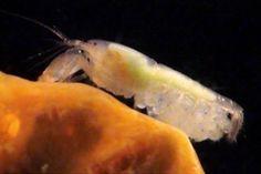 동물 6 (바다 생물 1,) : 네이버 블로그