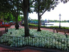 Flowers Epcot