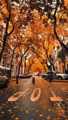 An ideal fall canopy in the city.