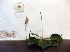 Tony Matelli: Weed