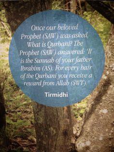 Qurbani / Udhiya at Eid ul Adha