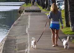 Walk your dog safely and enjoyably