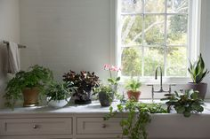 <img> Tried and tested, here are nine of our favorite houseplants that can survive in low light. See the whole lineup at Best Houseplants: 9 Indoor Plants for Low Light. Photograph by Mimi Giboin. Indoor Plants Clean Air, Indoor Plant Wall, Indoor Plants Low Light, Best Indoor Plants, Ficus Pumila, Plantas Indoor, Grands Pots, Kitchen Plants, Patio Plants