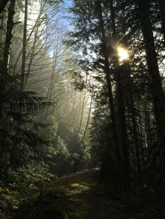 Misty Morning Walk - The sun begins to burn away the morning fog on Washington's Olympic Peninsula.  Just moments before, a steady rain convinced me to leave my D800 in the car, but even an iPhone camera is better than no camera at all!