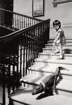 child walking the gator.