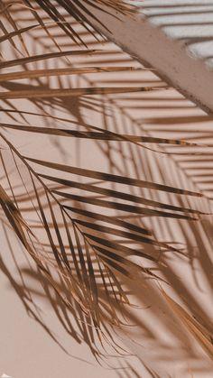 Iphone Wallpaper Plants, Aesthetic Desktop Wallpaper, Cute Wallpaper Backgrounds, Aesthetic Backgrounds, Cute Wallpapers, Beige Wallpaper, Graphic Wallpaper, Brown Aesthetic, Aesthetic Collage