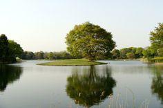 昭和記念公園。欅と水鳥の池。