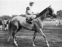 Adile Horse Racing, Race Horses, Thoroughbred Horse, Vintage Horse, Courses, The Past, History, Grey Horses, World