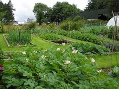 Vegetables crops are grouped into families. Crop rotation simply means that related annual vegetables are grown together in their fam. Types Of Vegetables, Growing Vegetables, Home Vegetable Garden, Home And Garden, Crop Production, Soil Improvement, Crop Rotation, Small Gardens, Garden Planning