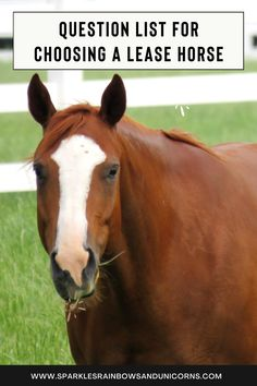 This is a MUST HAVE BEFORE you lease a horse. I have a printable sheet of the questions you can get so you don't forget the questions. It is a little excessive with over 50 questions but!.... it will save you headache in the long run, you will really understand the lease you are going into and the communication between you and the owner will be crystal! #horselease #horseleasing #leasingahorse Horse Riding Tips, Riding Lessons, All About Horses, What If Questions, Horseback Riding, How To Run Longer, Equestrian, Don't Forget, Communication