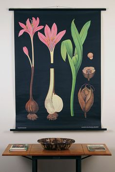 Botanical Pulldown School Chart--Orchid--Mid-Century Classroom Science Poster 1950s