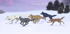 The pack of the Anime series, Wolf's Rain. Tsume, Kiba, Toboe, Hige, and Blue.
