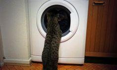 Kaninchenfan Lucky - Mein Kaninchenloch: Better than TV ^_~ ♡  #cat #neko #katze   http://kaninchenfanlucky-meinkaninchenloch.blogspot.de/2014/01/better-than-tv.html