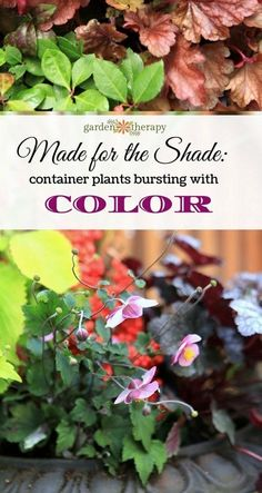 Perennials for shade that don't skimp on wow factor