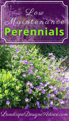 "Beautiful perennials for your landscape design. I don't think I ever had a client that said ""Give me high maintenance, please""! Discover some great, easy to care for, drought tolerant perennials for your garden. #gardenandlandscapedesign"