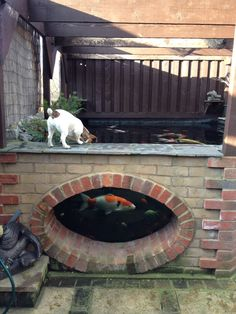 Amazing koi carp raised pond with viewing window. #garden. water feature More