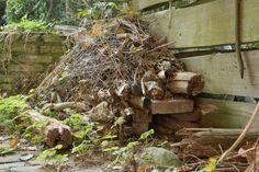 Maak een overwinteringsplek voor egels in je eigen tuin!