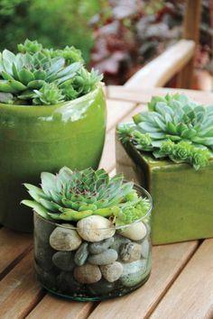 Sukkulenten Arten - Die vielfältige Durstkünstler sind tolle Pflanzendekoration