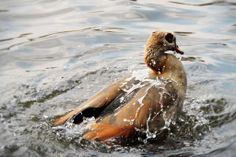 Sink Or Swim, Swimming, Photography, Animals, Swim, Photograph, Animales, Animaux, Fotografie
