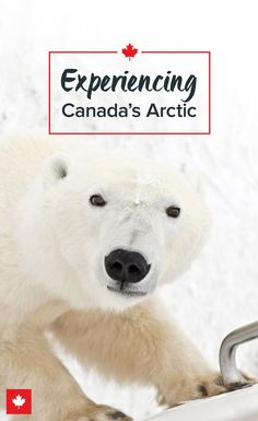 Though we often think of the Arctic as empty, it's actually full of incredible wildlife, from polar bears to belugas. Canada Destinations, Vancouver, Canadian Travel, Visit Canada, Iceland Travel, Ocean Life, Arctic, Trip Planning, Adventure Travel